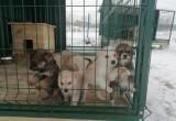 В Сатке открылся центр адаптации бездомных животных «Открытое сердце»