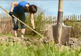 Лунный календарь подсказывает саткинским садоводам, какие работы и когда проводить