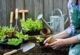 Вниманию садоводов Саткинского района: лунный календарь с 6 по 12 мая