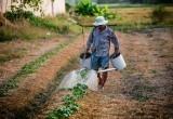 Фермеры и владельцы личных подсобных хозяйств из Саткинского района могут получить гранты