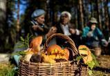О чем любителей грибов предупреждают Роспотребнадзор и поисковики Саткинского района