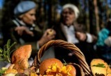 О чем грибников предупреждают Роспотребнадзор и поисковики Саткинского района