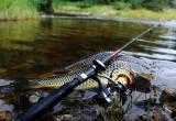 Житель Сатки попросил опубликовать правила рыбной ловли в 2019 году