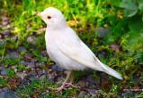 «Такого я ещё не видел!»: в саткинском нацпарке «Зюраткуль» замечена редкая птица