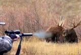 «А могли и свободы лишиться»: жители Челябинской области заплатят 1 млн рублей за убитых лосих