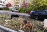 Саткинцы разделились на два лагеря: одни за отлов бездомных собак, другие против этого