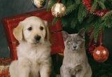 «Берегите своих питомцев!»: бакальский ветеринар Александр Тарасов дал несколько рекомендаций