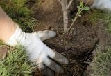 «А ещё кустарники и цветы»: в этом году в Сатке будет высажено более 1800 деревьев