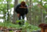 «Не будьте самонадеянными!»: саткинец предостерегает земляков, отправляющихся в лес за грибами